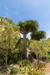 Rayol arbre ciel 1L8A2951