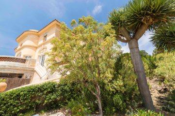 Rayol arbre demeure 1L8A2954