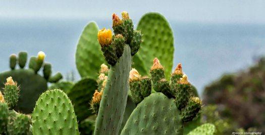 Rayol cactus 1L8A2708